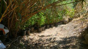נחשף שדה סמים באור יהודה