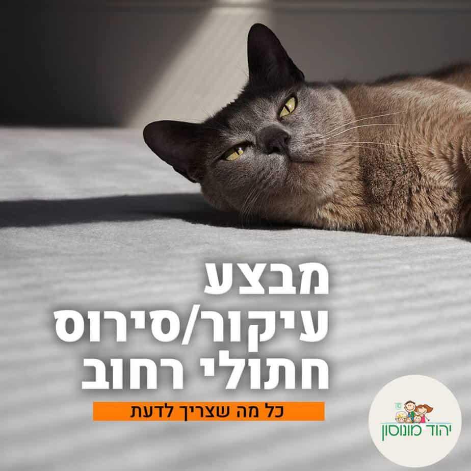 סירוס חתולים ביהוד