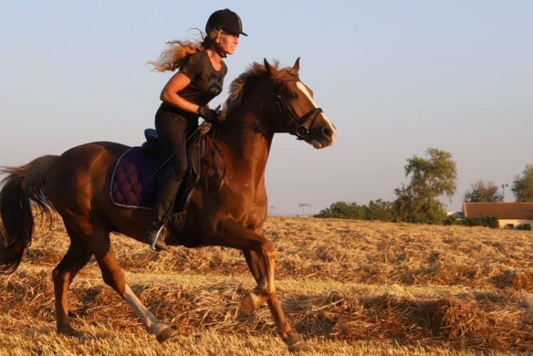 חוות הסוסים של חנה
