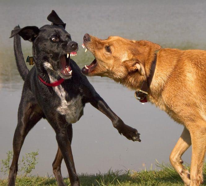 קרבות כלבים בקריית אונו