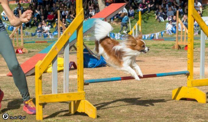 תחרות כלבים בסביון