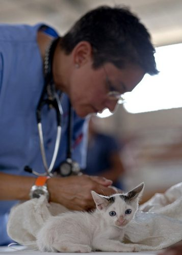 וטרינרית בוחנת חתולה