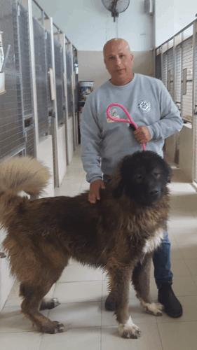 בית ארז דוגסלייף – פנסיון לכלבים במשמר השבעה