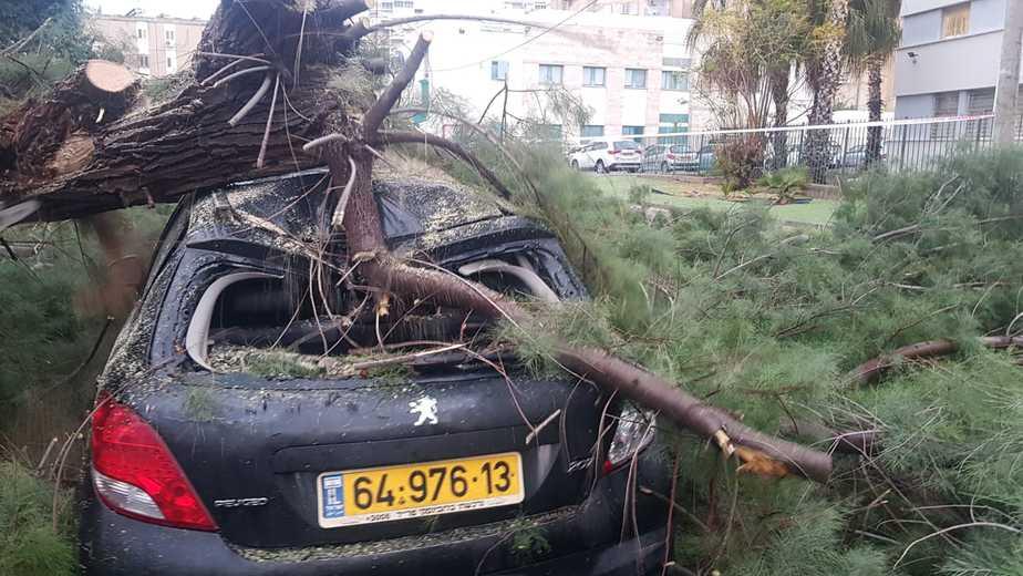 עץ שקרס על מכונית. צילום: איחוד והצלה אור יהודה