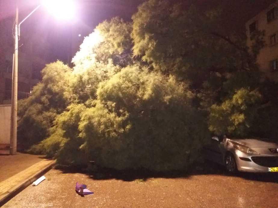 מכוניות נמחצו תחת העץ. צילום: איחוד והצלה אור יהודה