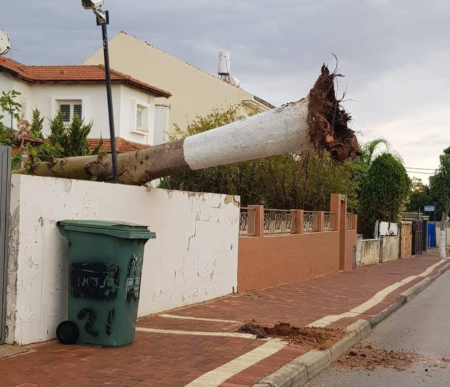 העץ שקרס ברמת פנקס
