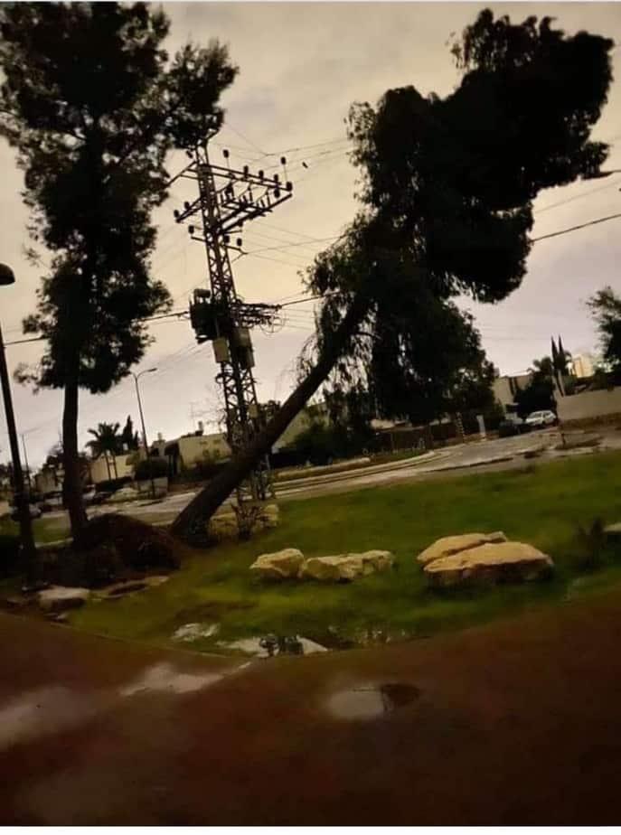 העץ שקרס. צילום מתוך הפייסבוק של בנצי סיד