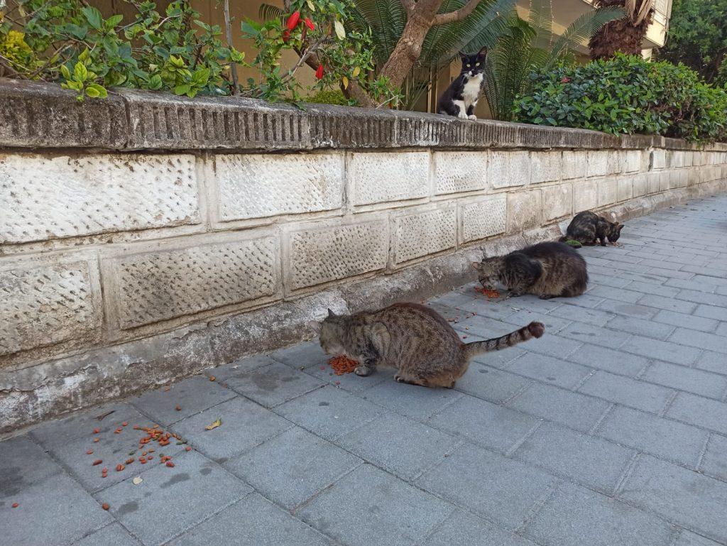 האכלת חתולים צילום נטלי פורטי