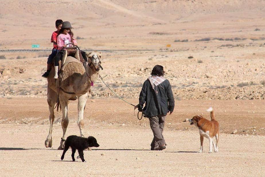 טיולי רועים צילום יחצ