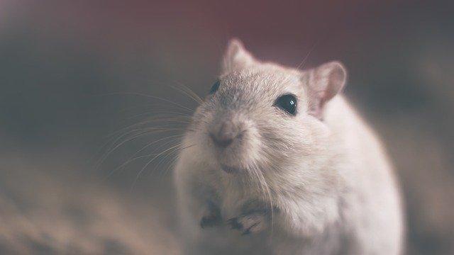 עכברים אריאל פרץ כתבה 10