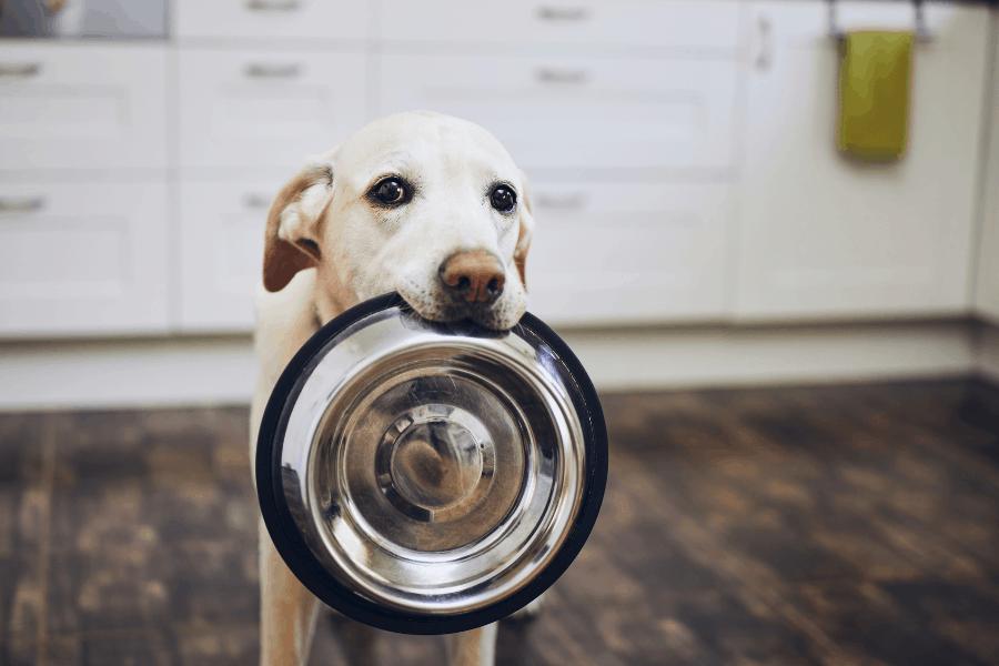 ליעד מרום – canva אוכל כלב