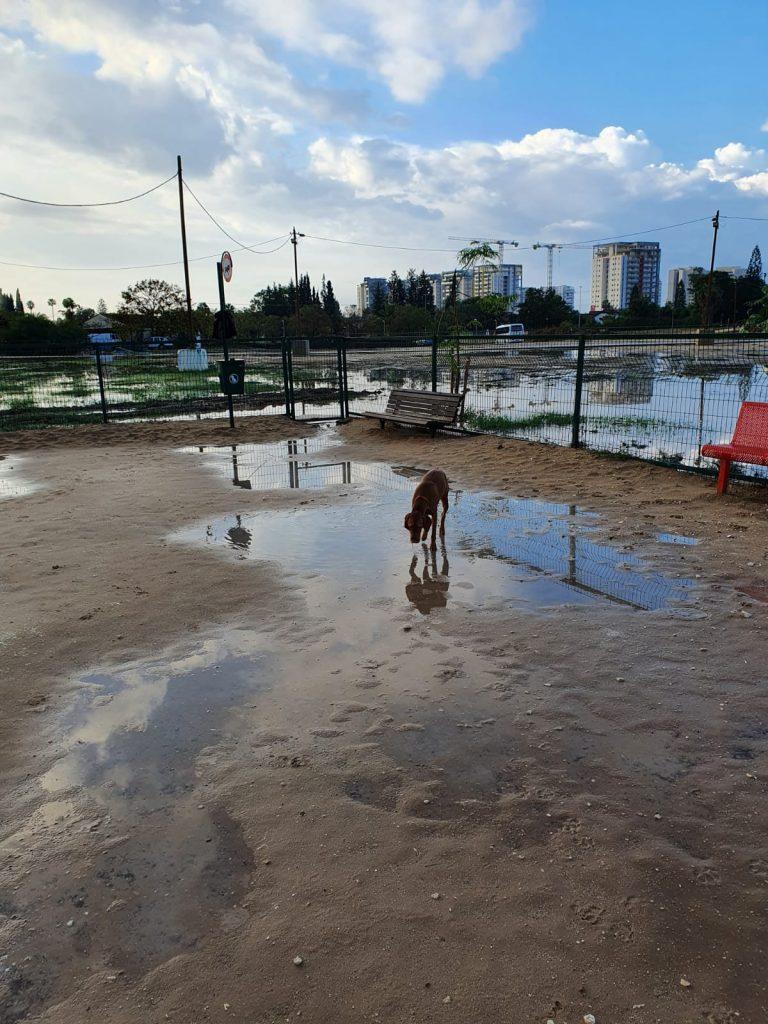גינת כלבים חורף- בן פלד
