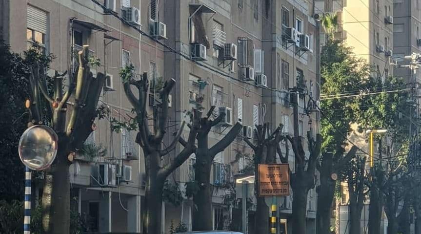 עצים רחוב הרמה גני תקווה צילום פרטי