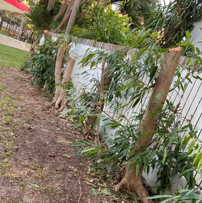 עצים כרותים בפארק תבור בגני תקווה