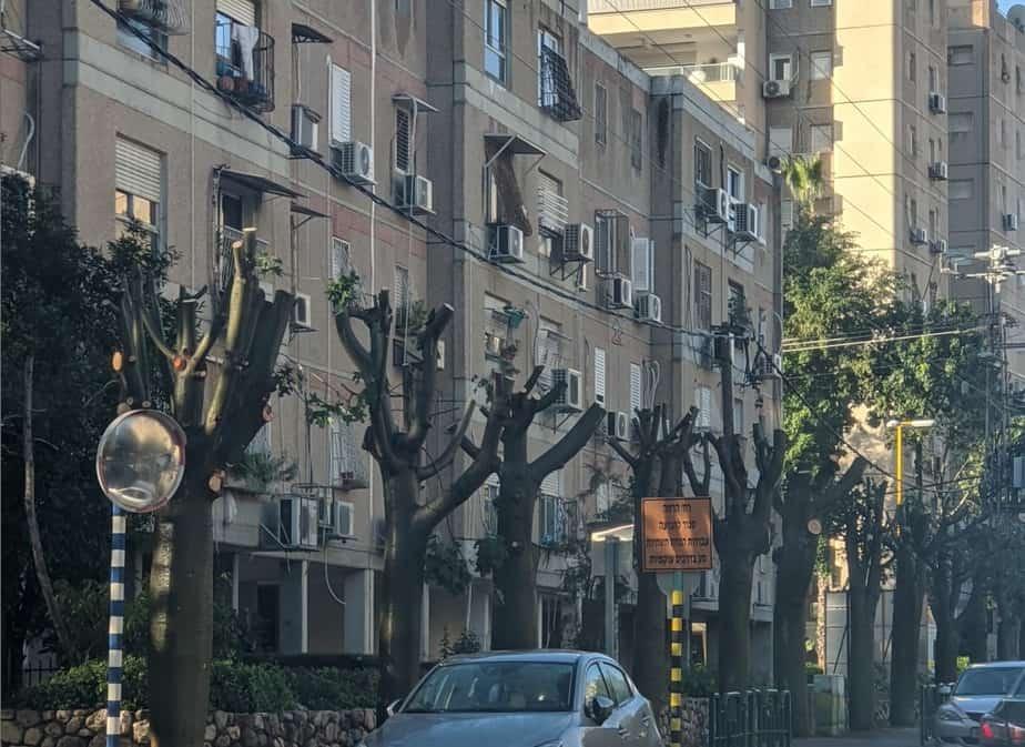עצים כרותים גני תקווה