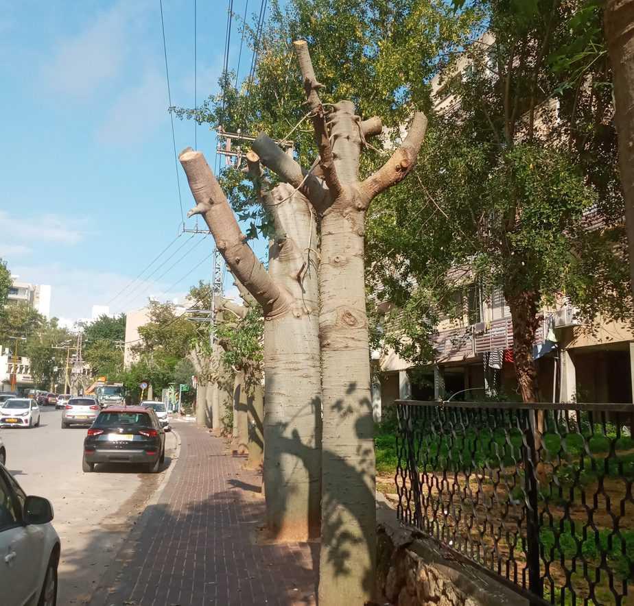 עצים גני תקווה (צילום שאול לוי)