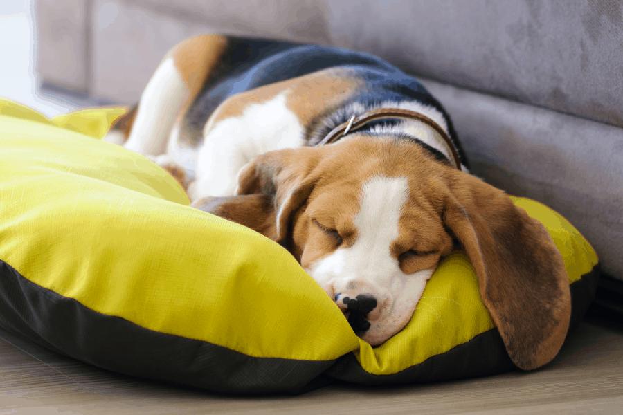 ליעד מרום – canva מיטה לכלב