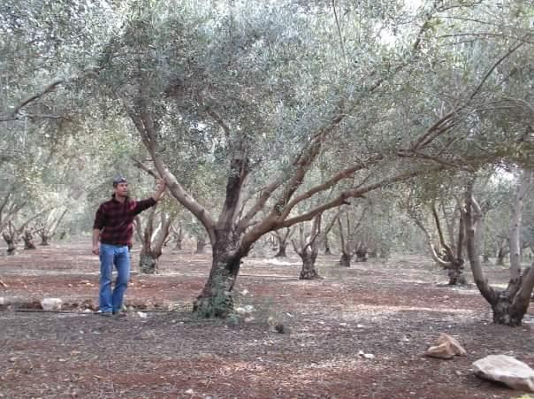עצות לשתילת עצים (צילום באדיבות שאול לוי)