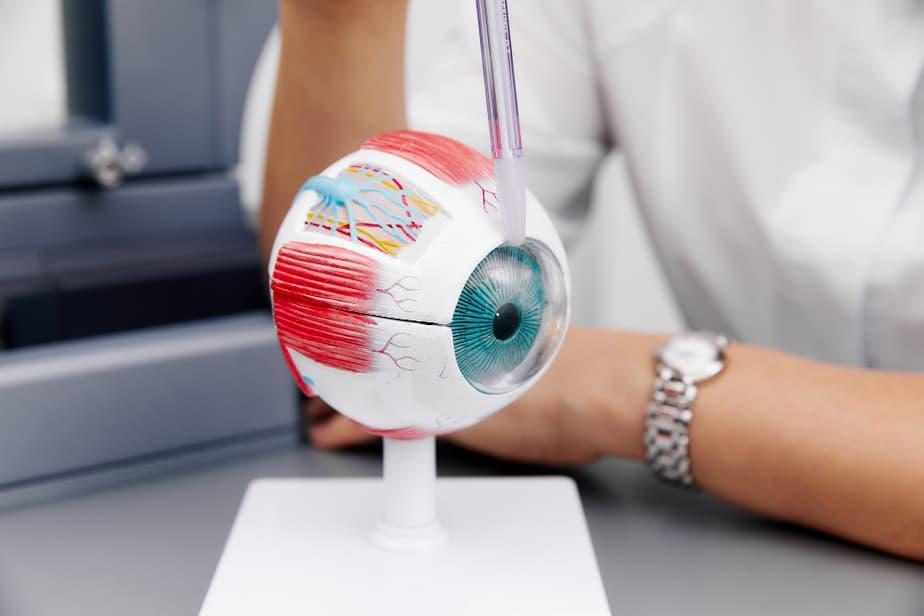מגה לינקס freepikenlarged-anatomical-eye-model-laboratory-samplers